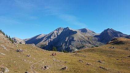Pelouse alpine