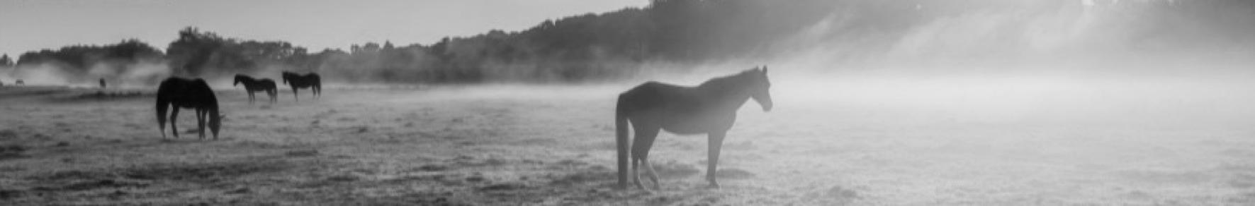 temoignages feedback horsecoaching areion