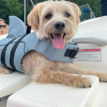 Summer Essentials for your Dog