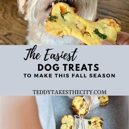 The Easiest Dog Treats To Make This Fall Season!