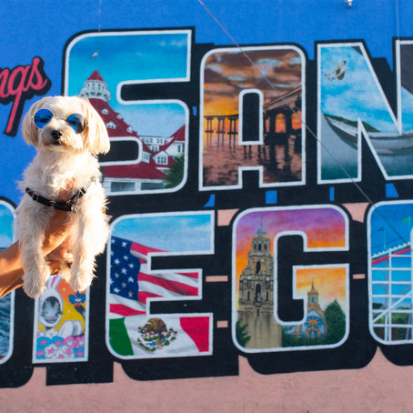 Travel Guide: A Weekend Getaway in San Diego with your dog!