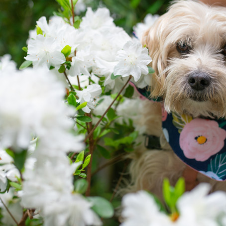 3 pet friendly adventures to try this Spring- #ATL Edition