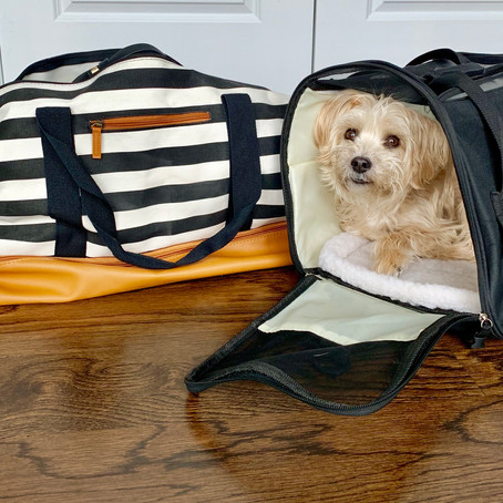 Tips for traveling domestic with your dog.