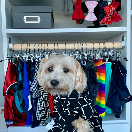 Tips for Organizing Your Dog's Closet