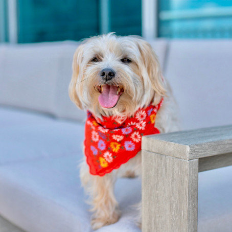 Avoid Heat Stroke- 5 Ways to Keep Your Dog Cool in the Summer