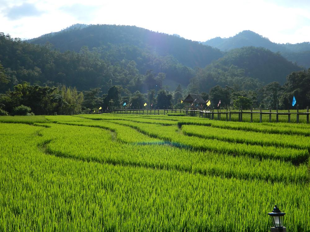 Pont de bamboo et rizière, Pai (Nord de la Thaïlande)