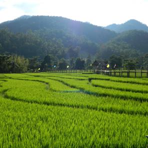 Mes endroits préférés en Thaïlande (mes villes & mes restaurants coups de coeur)