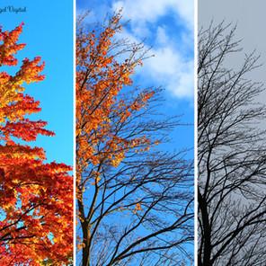 Comment survivre à l'automne