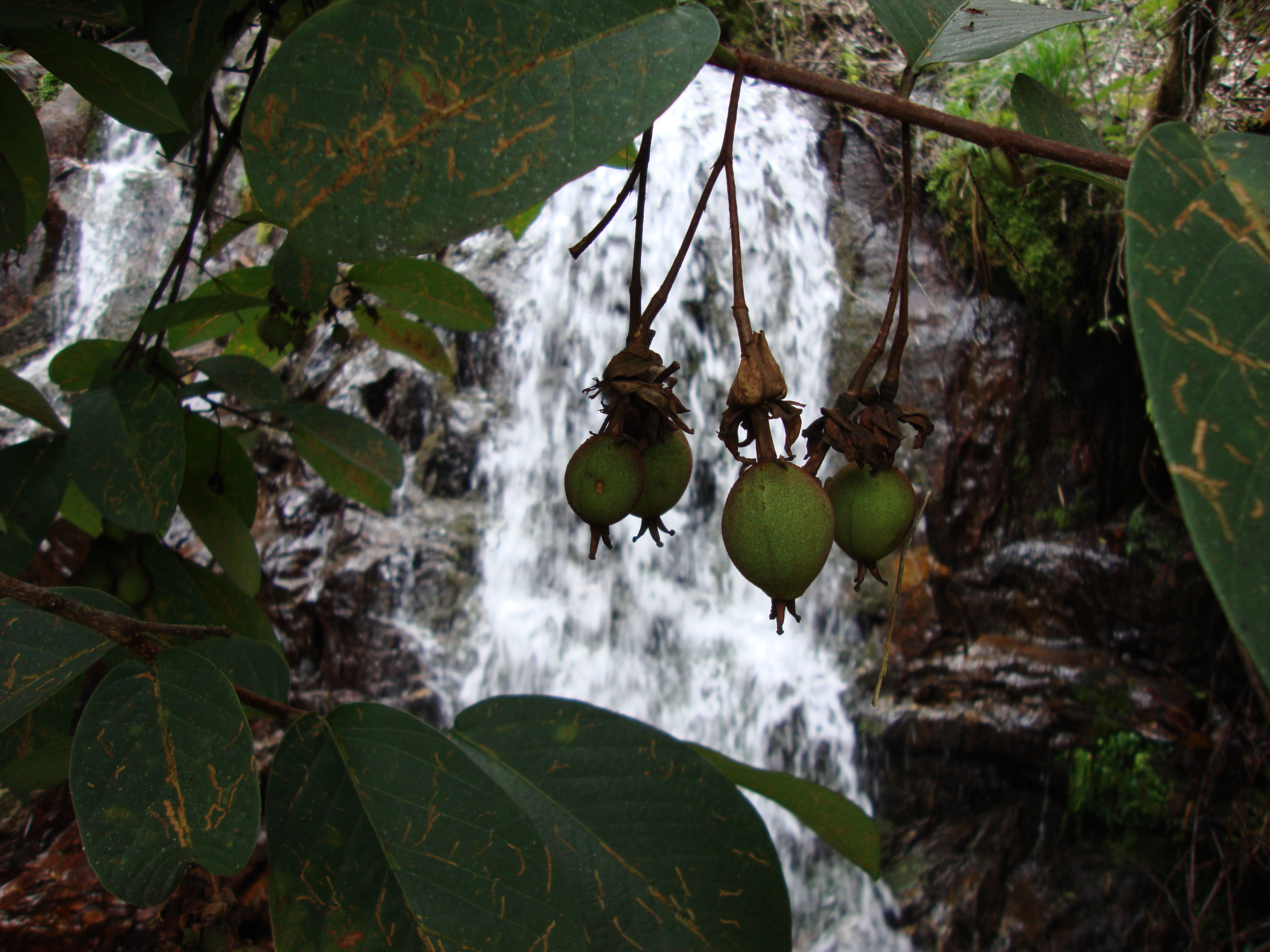Vida y naturaleza Antioquia