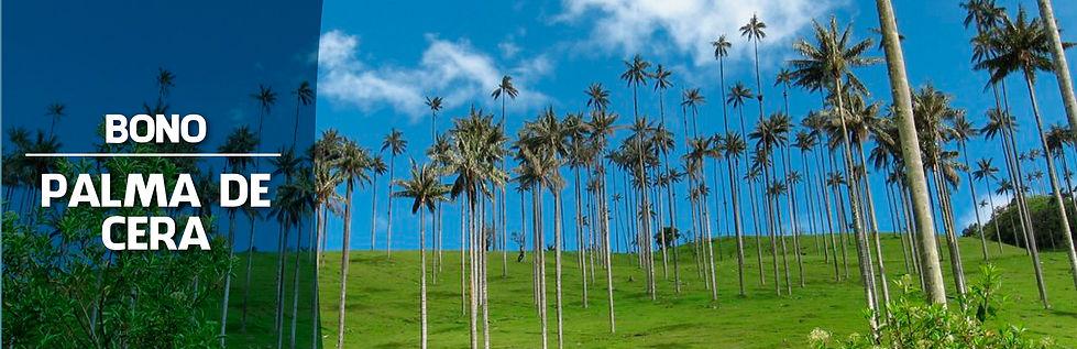 Fundacion guanacas medellín Bono palma de cera