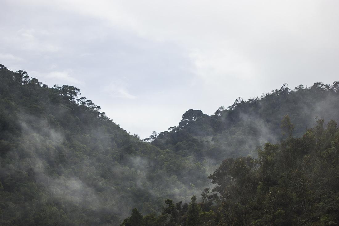 Bosques de Niebla en Fundación Guanacas