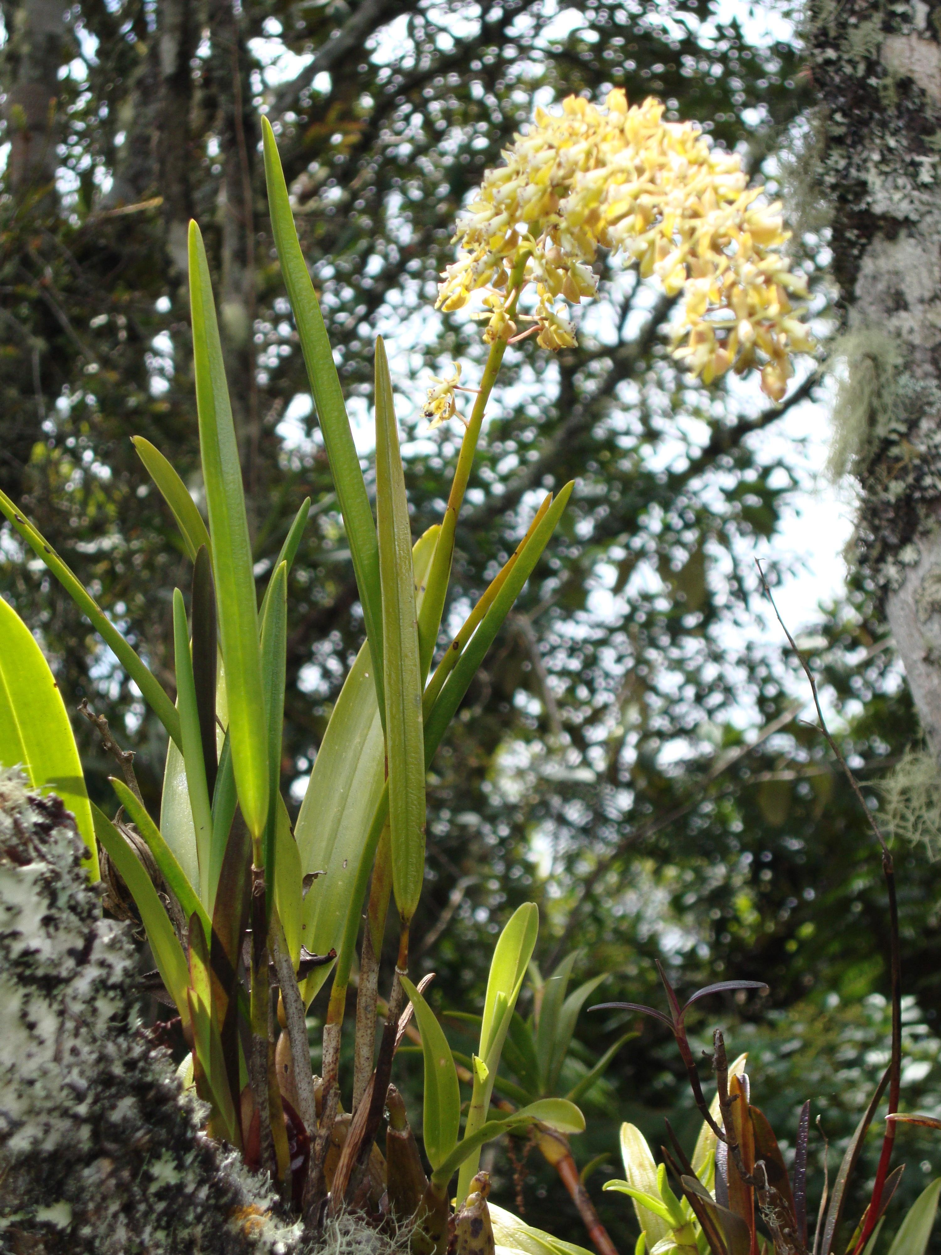 Vida y naturaleza en Guanacas