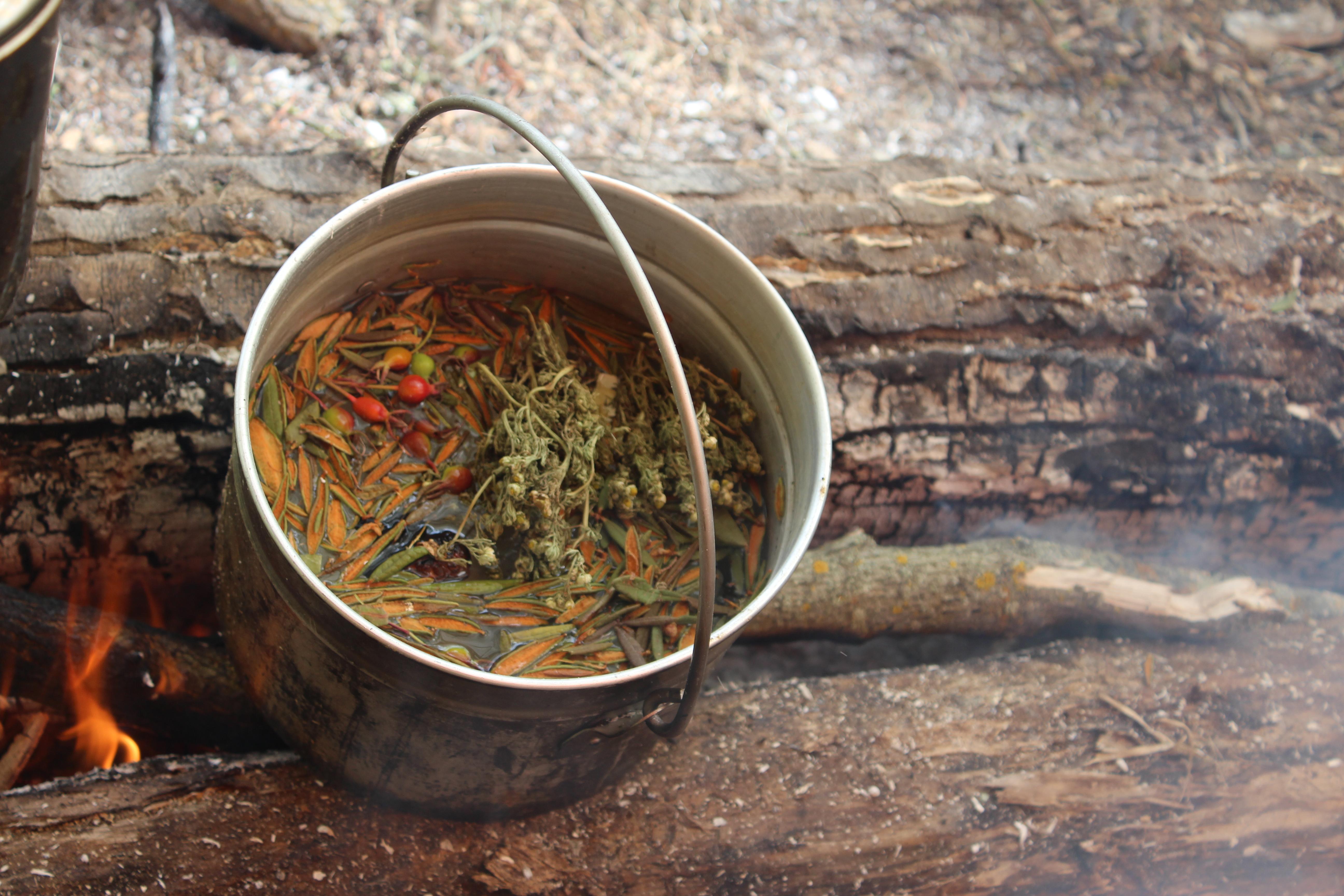 Bush Tea