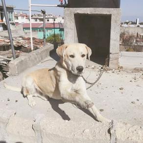 Proponen endurecer protección animal con nueva ley busca prohibir el maltrato animal