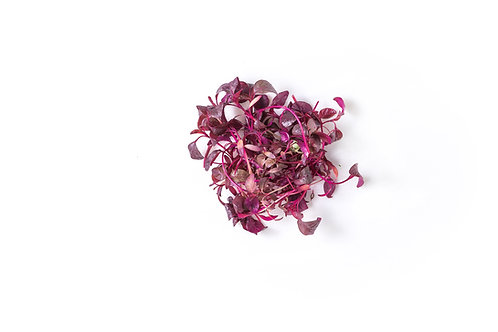 Red Amaranth Microgreens