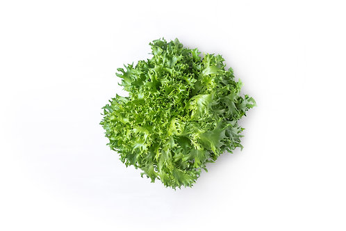 Green Sweet Lettuce