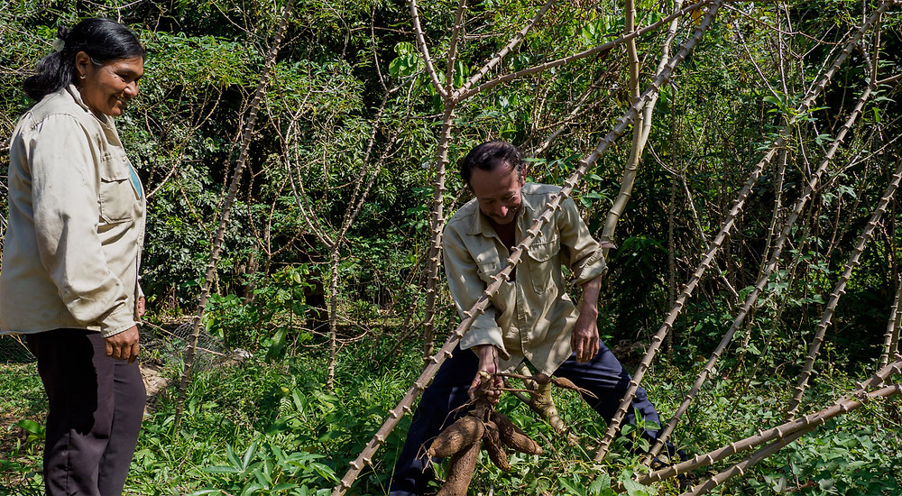 LVMH e UNESCO levam projeto conjunto da Amazônia além no Dia Internacional da Biodiversidade
