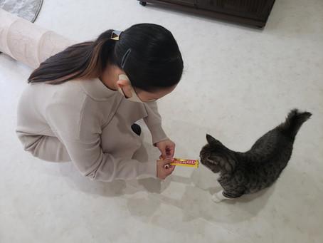 猫店長の活動報告