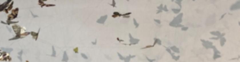 Moths thin banner.jpg