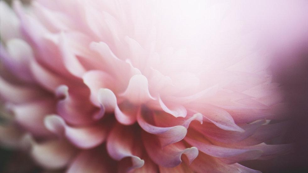 Selbsterfüllungsblume.jpg