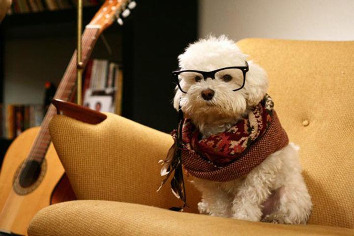 hipster_dog.jpg