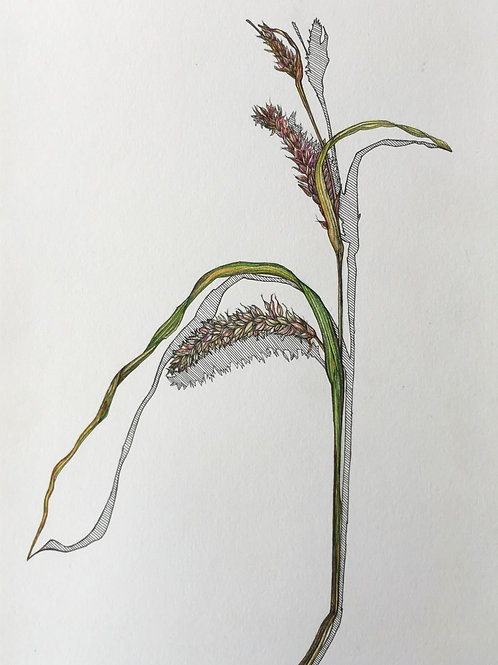 Original drawing  - Summer Grasses