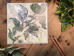 Ivy with envelope.jpg