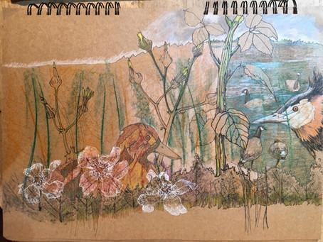Nature journaling at Langford Lakes
