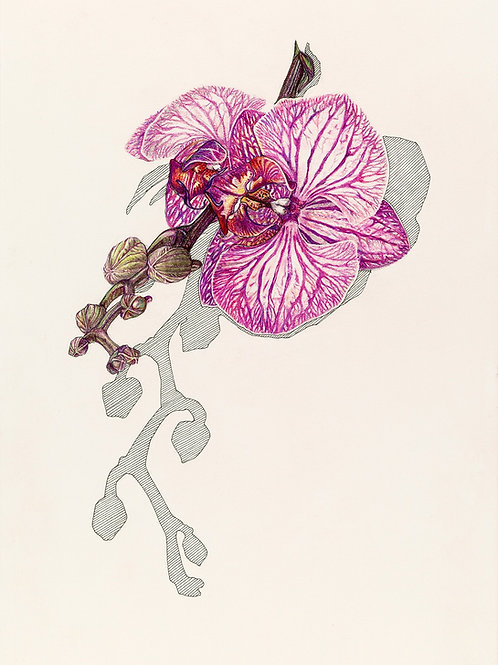 'Orchid' Print. Price includes P+P.