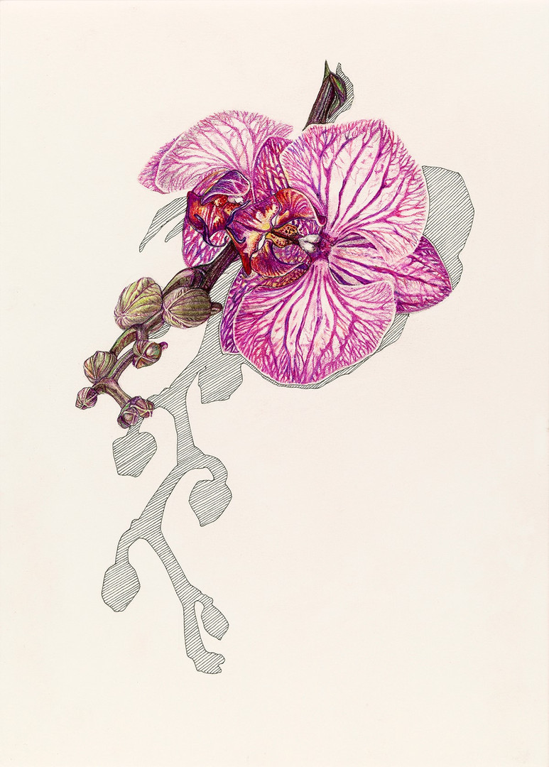 Orchid 2020.jpg