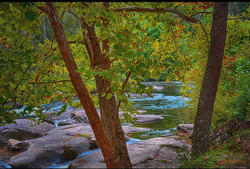 Trees and river water