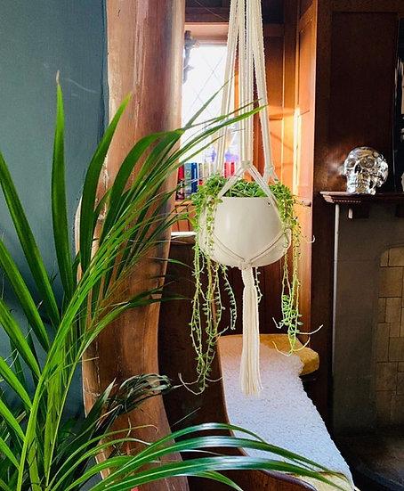 Natural Plant Hanger