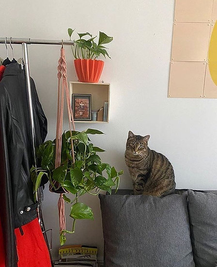 Blush Plant Hanger