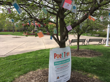 WordPlay poets, local youth plant seeds for month of Poet Tree in Hoffner Park