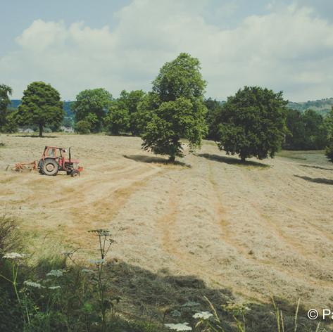 Harvest in the Peak