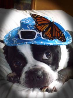 kerm butterfly.jpg