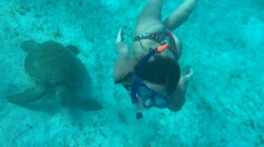 schwimmen mit den Meeresbewohnern