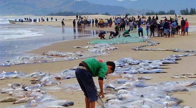Pesca Artesanal da Tainha
