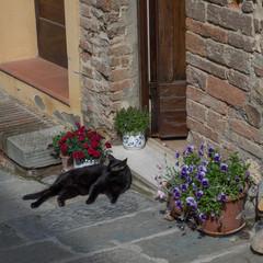 Assisi Cat