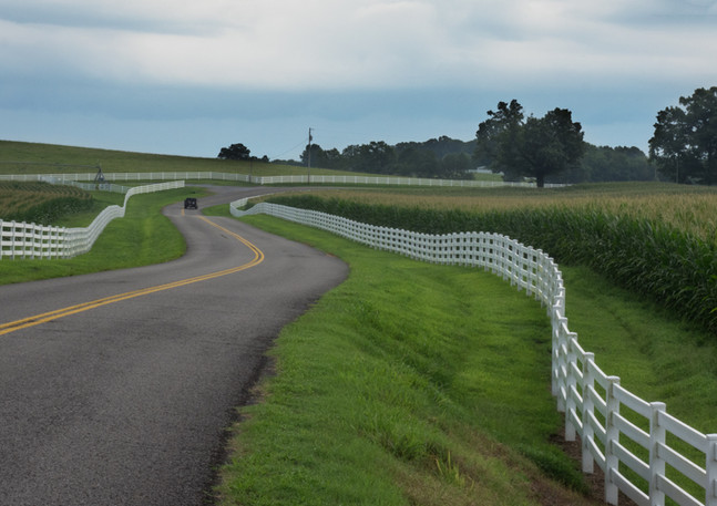 Fence and Cornfields