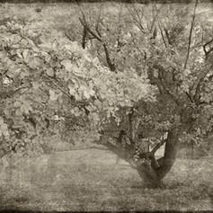 Depot Tree