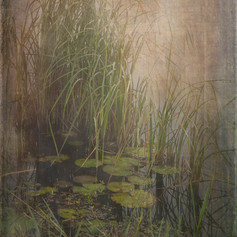 Lily Pond - Savannah National Wildlife Refuge