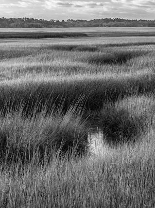 Florida Marshes