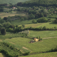 Montepulciano Vineyard
