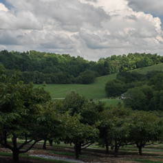 Forgie's Fruit Orchard