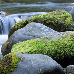 Sol Duc Creek