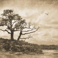 Marsh Tree