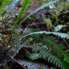 Spider Web on Fern