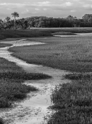 Marshes After the Rain