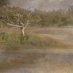 Lone Tree - Pinckney Island National Wildlife Refuge